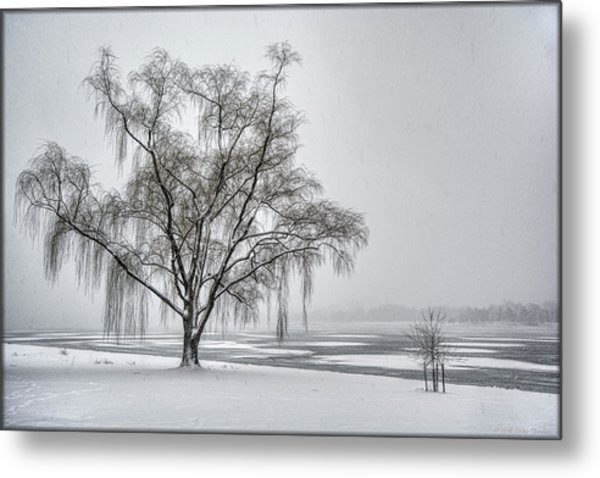 Willow In Blizzard Metal Print