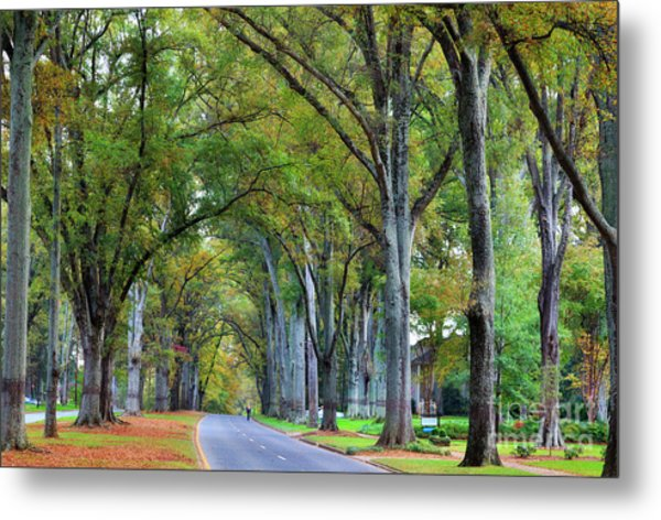 Willow Oak Trees Metal Print