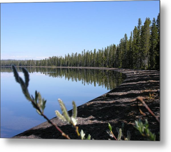 Willows Metal Print by Mel Crist