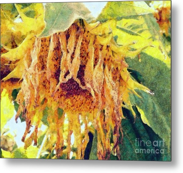 Wilted Sunflower - What A Day Metal Print by Janine Riley
