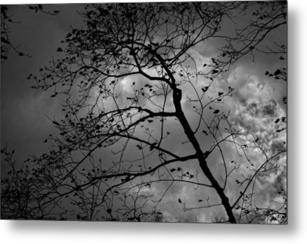 Wind And Rain Are On The Way Metal Print