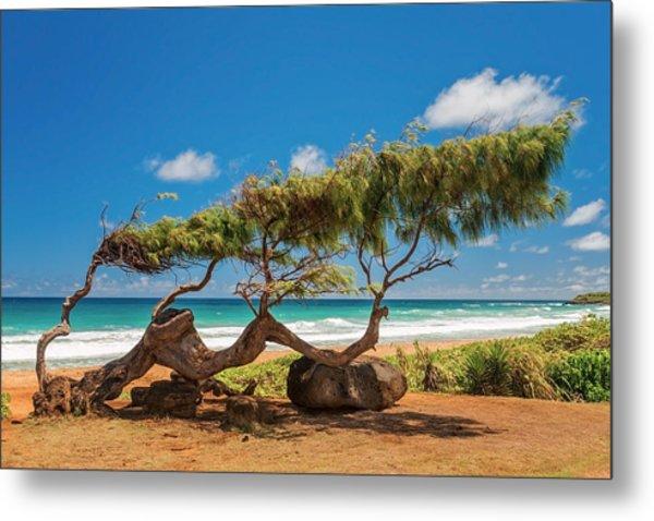 Wind Blown Tree Metal Print