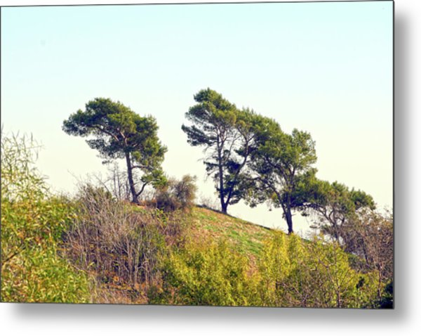 Wind Blown Trees Metal Print