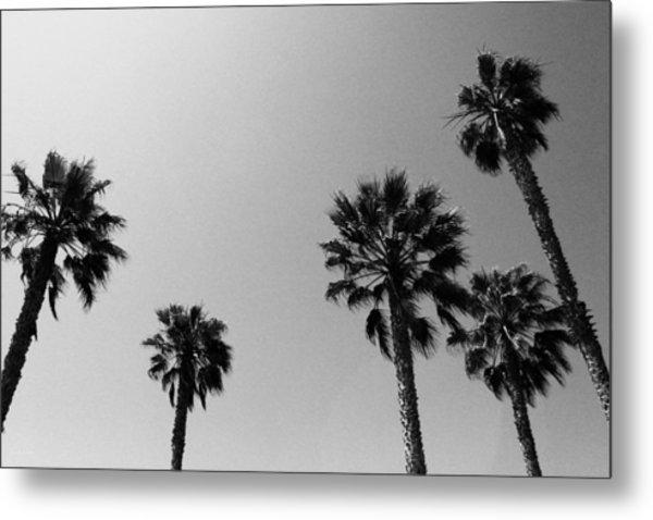 Wind In The Palms- By Linda Woods Metal Print