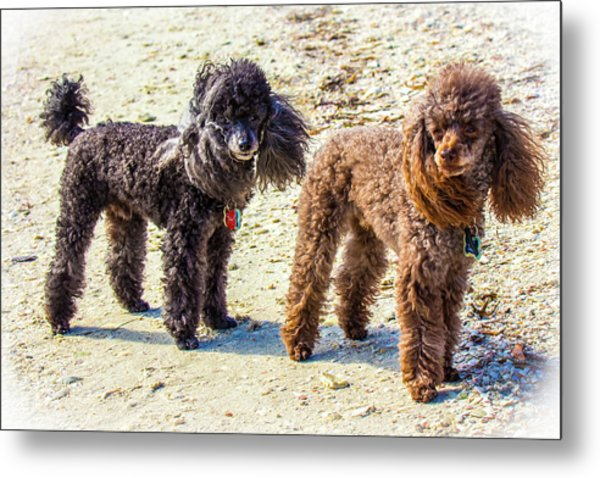 Windblown Beach Bums Metal Print