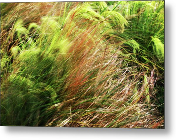Windblown Grasses Metal Print