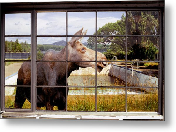 Window - Moosehead Lake Metal Print by Peter J Sucy
