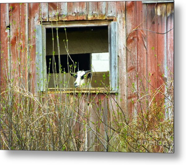 Windows App Metal Print
