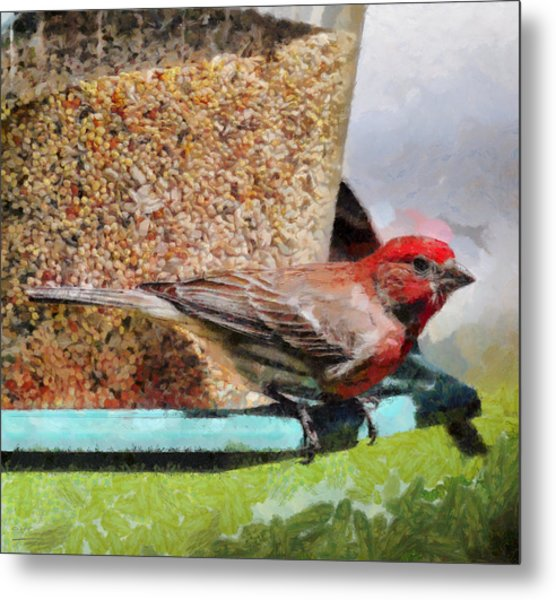 Windsor House Finch Metal Print