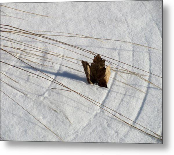 Windswept Metal Print by Douglas Pike