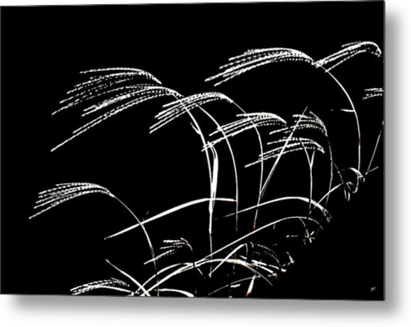 Windswept Grasses Metal Print