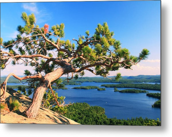 Windswept Pine On Rattlesnake Mountain Metal Print