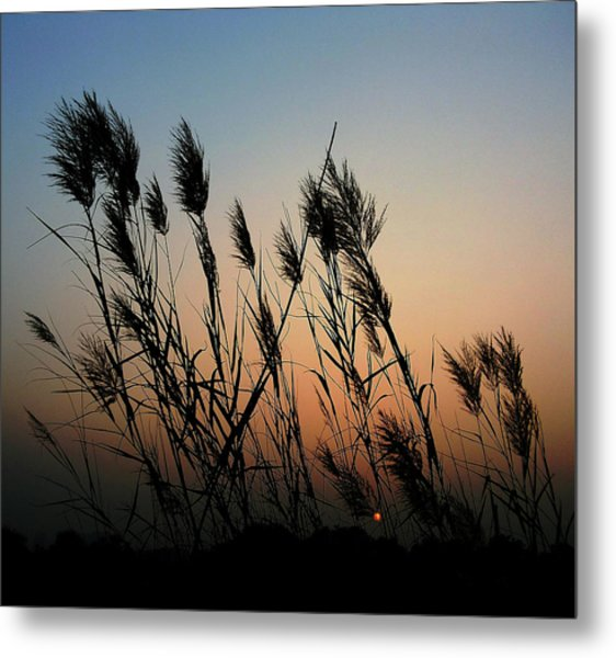 Windy Sunset Metal Print