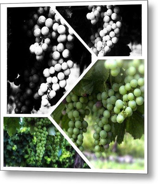 Wine Photography Metal Print