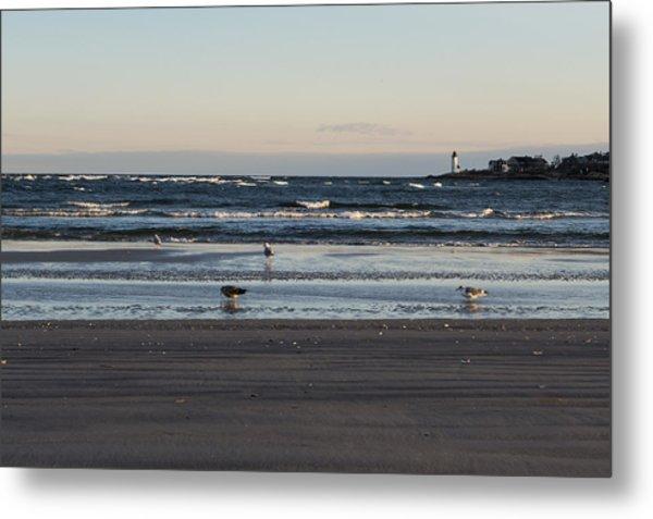 Wingaersheek Beach Seagulls At Sunrise Metal Print