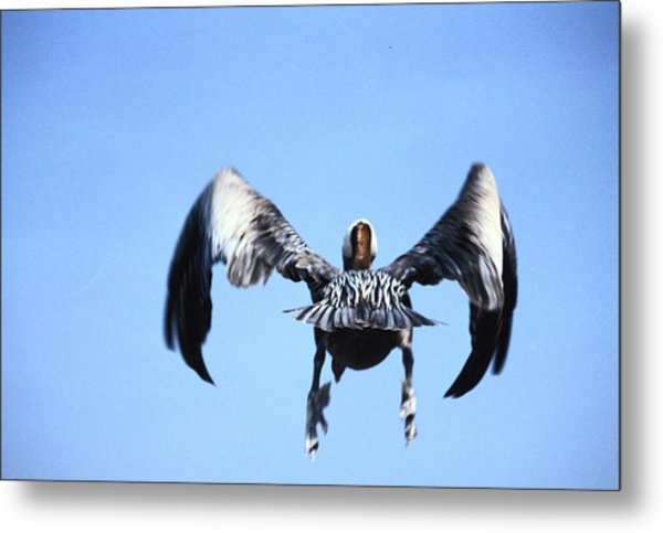 Wings In Position And Flaps Down Metal Print by Carl Purcell