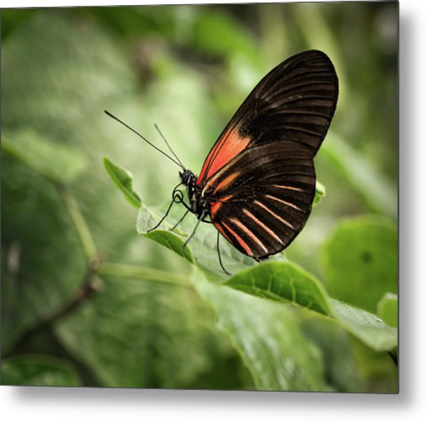 Wings Of The Tropics Butterfly Metal Print