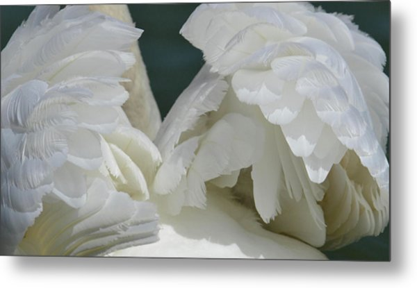 Wings Of White Metal Print