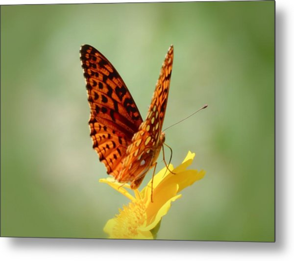 Wings Up - Butterfly Metal Print