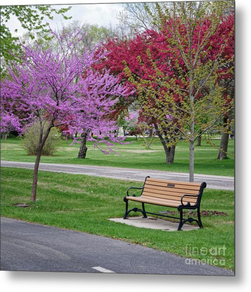 Winona Mn Bench With Flowering Tree By Yearous Metal Print