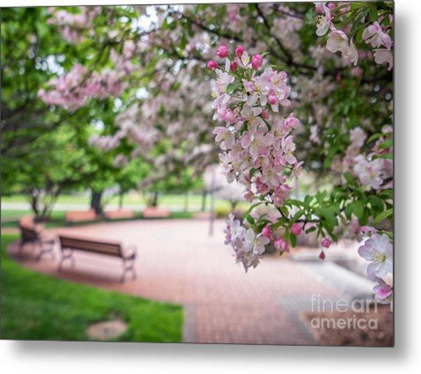 Winona Veterans Memorial With Blossoms Metal Print