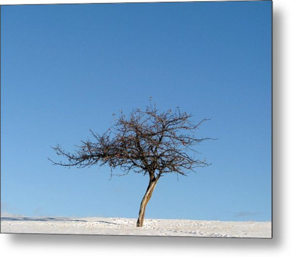 Winter At The Crabapple Tree Metal Print