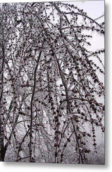 Winter Beauty Metal Print by Audrey Venute