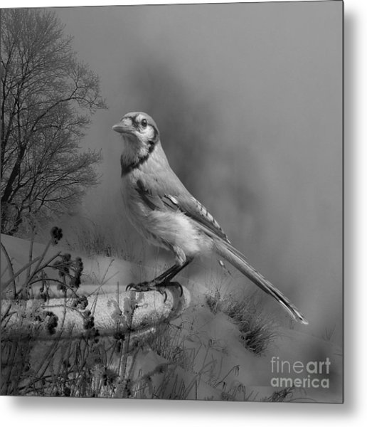 Winter Bird Metal Print