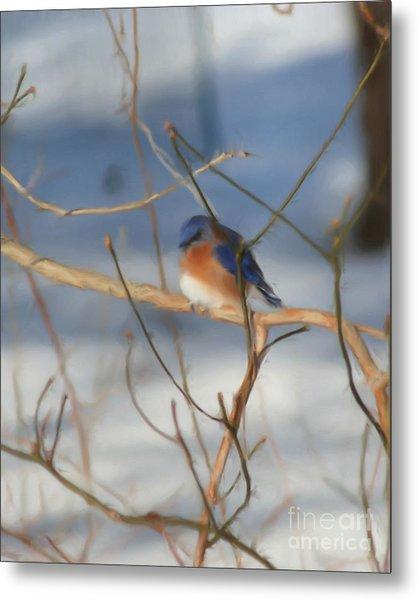 Winter Bluebird Art Metal Print