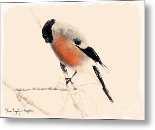Winter Bullfinch Metal Print