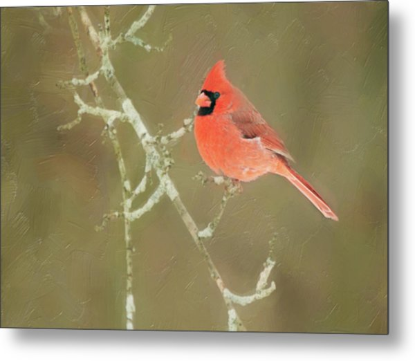 Winter Cardinal Metal Print