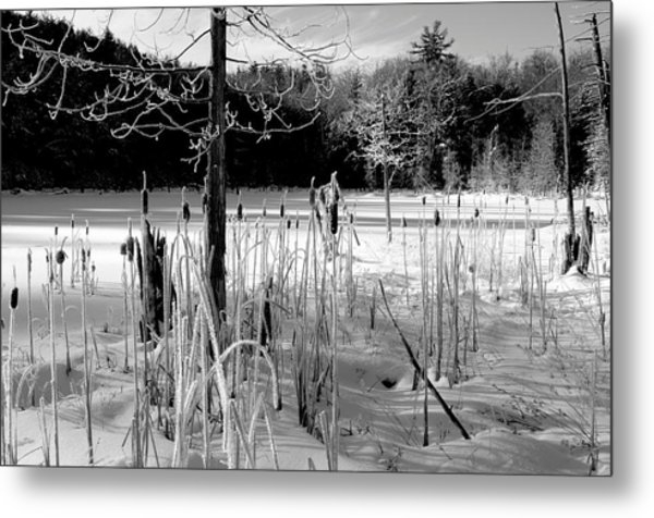 Winter Cattails Metal Print