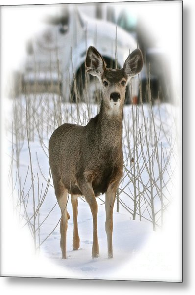 Winter Deer On The Tree Farm Metal Print