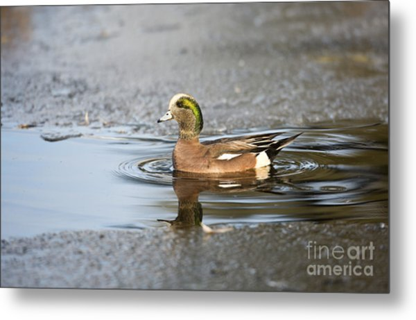 Winter Dip Metal Print