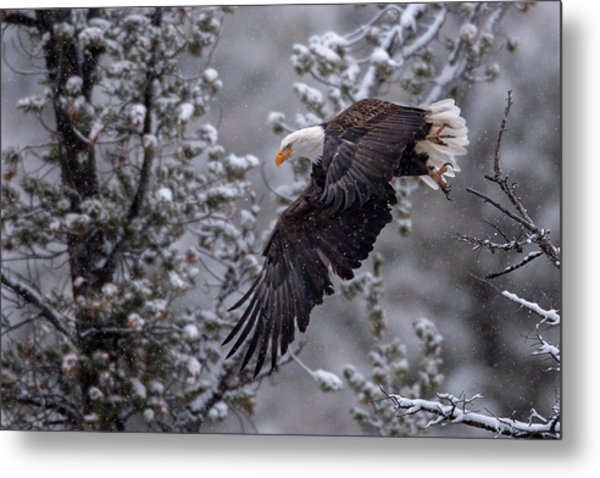 Winter Flight Metal Print