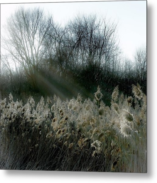 Winter Fringe Metal Print