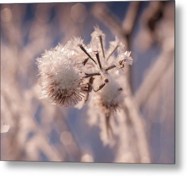 Winter Frost Metal Print