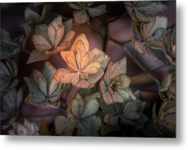 Winter Glow Metal Print