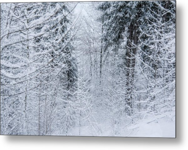 Winter Glow- Metal Print