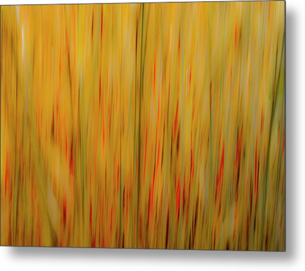 Winter Grasses #1 Metal Print