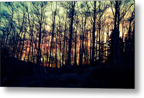 Winter Grove Metal Print