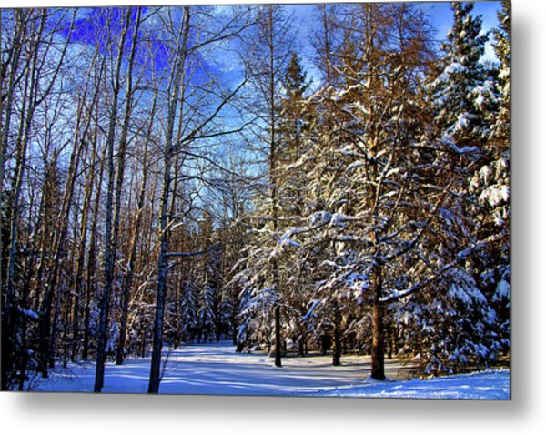 Winter In Maine Metal Print by Gary Smith