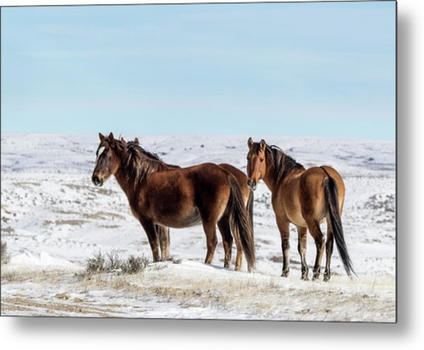 Winter In Sand Wash Basin - Wild Mustangs Metal Print