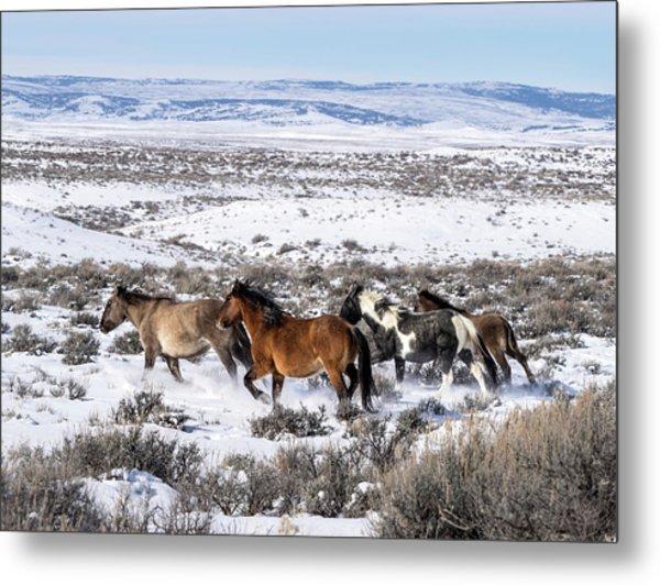 Winter In Sand Wash Basin - Wild Mustangs On The Run Metal Print