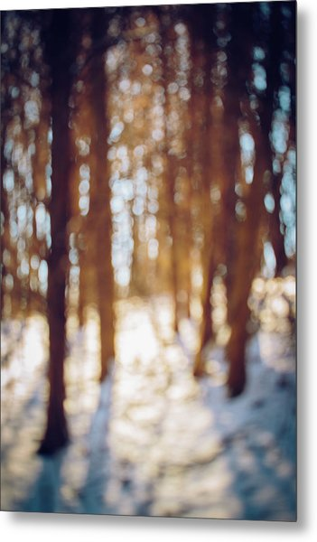 Winter In Snow Metal Print