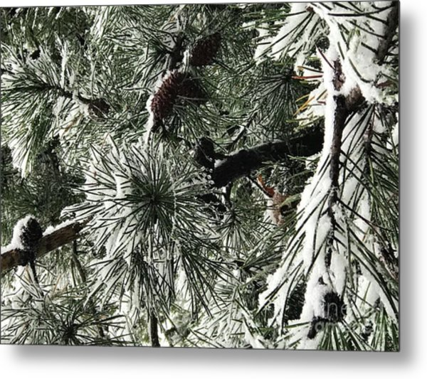 Winter Land  Metal Print