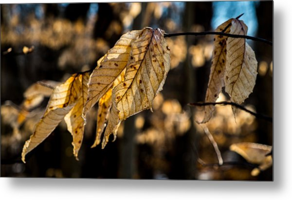 Winter Leaves Left Metal Print