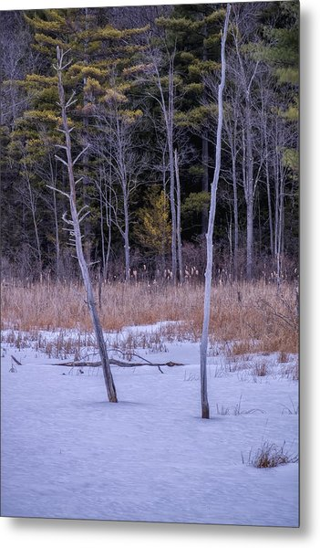Winter Marsh And Trees Metal Print