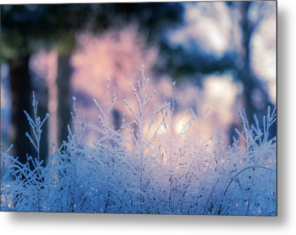 Winter Morning Light Metal Print