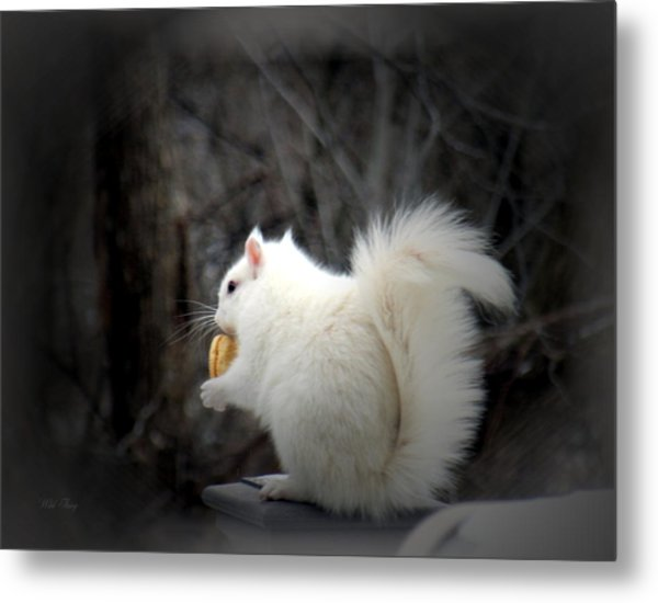 Winter Nibbles Metal Print